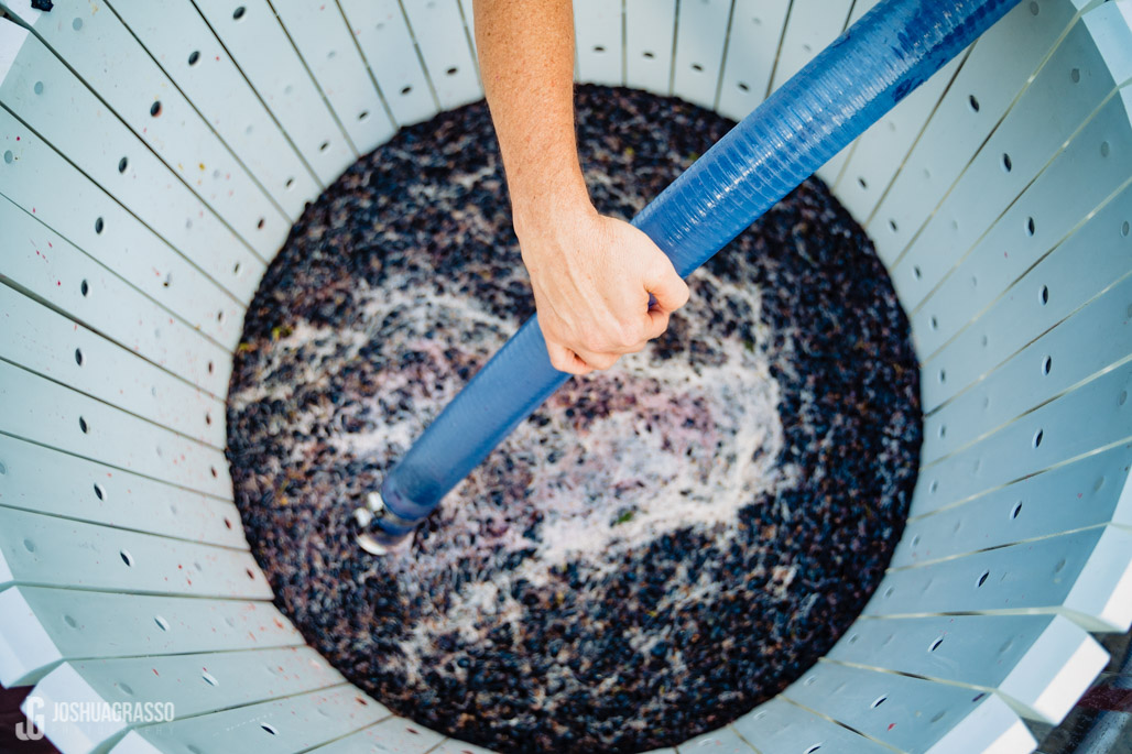 crushed chambourcin grapes at accent cellars dahlonega