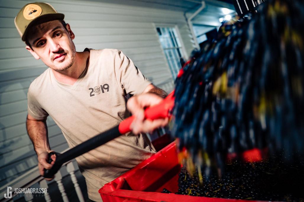tristen vanhoff scooping grapes for the crush accent cellars dahlonega